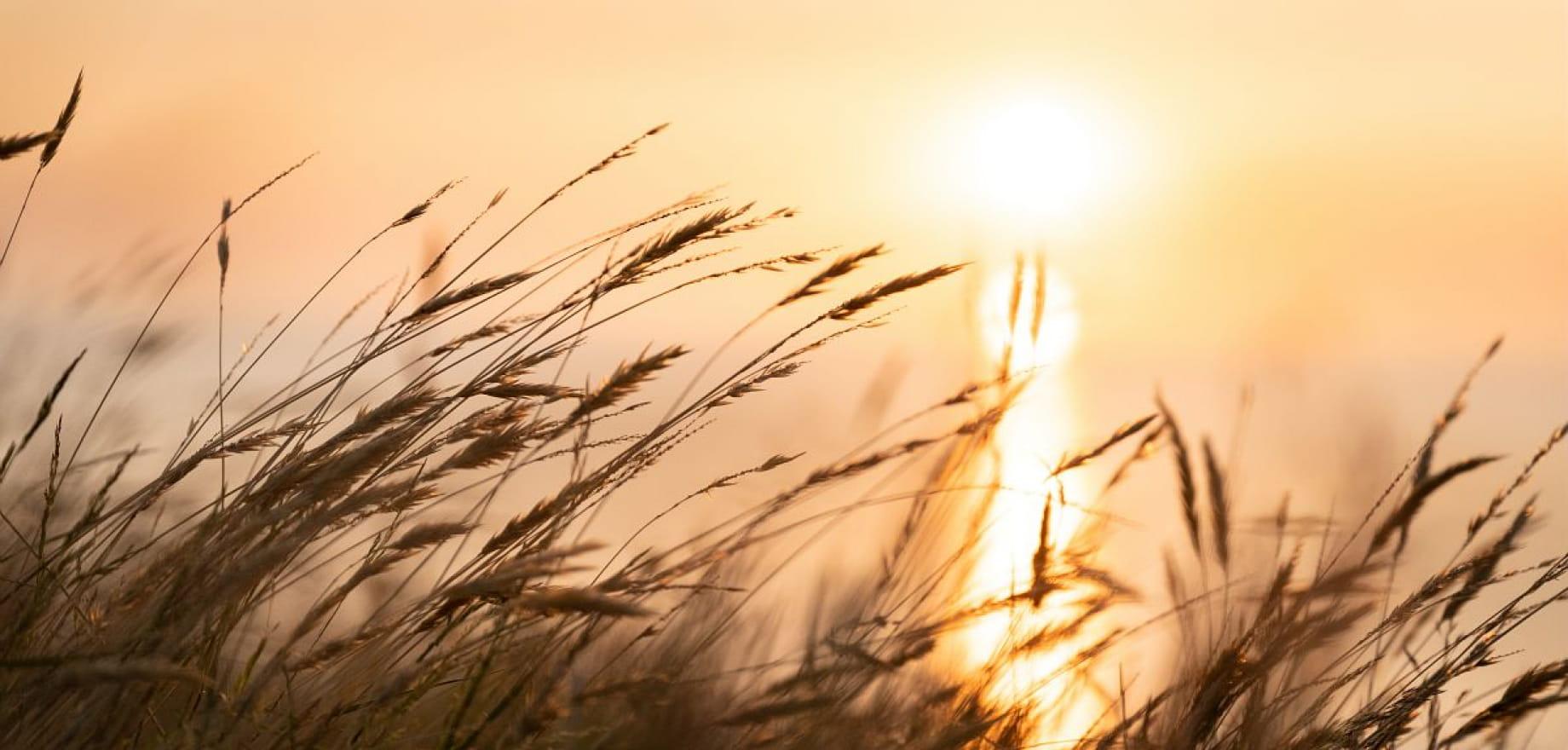Pointe de la Bechue, plage Tournemine - Les Rosaires, Plerin - Lever soleil - Zoom vegetation