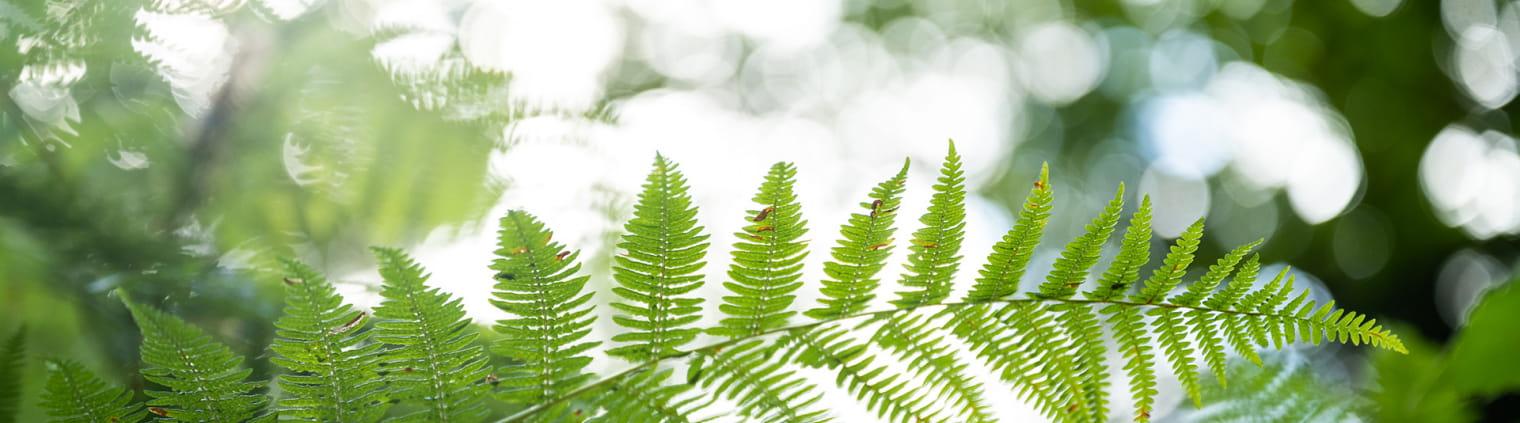 Bois de Pledran - Zoom vegetation feuille