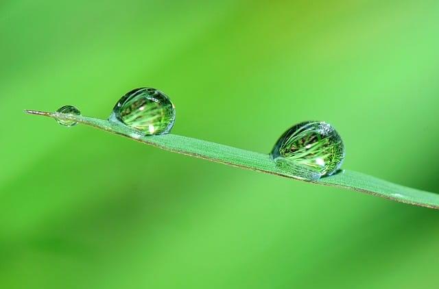 nature-pixabay