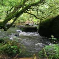 Vallée du Gouët
