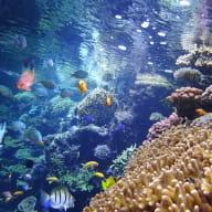 Recif-corallien-Copyright-Oceanopolis-edited