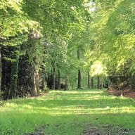Chateau-Granville allee bois