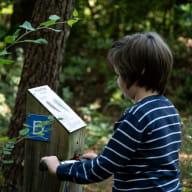 Bois de Pledran_Plédran_jeux