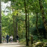 Bois de Plédran_Pledran_sentier