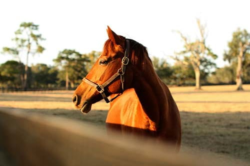 Equitation - cheval St Cast le Guildo