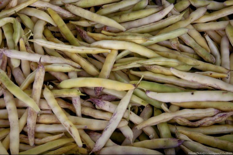 cocos de paimpol