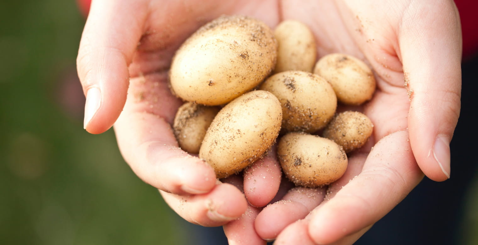 Pommes_de_terre_ploeuc