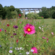la_jardin_de_la_biodioversité_saint-brieuc_vallée_gouédic
