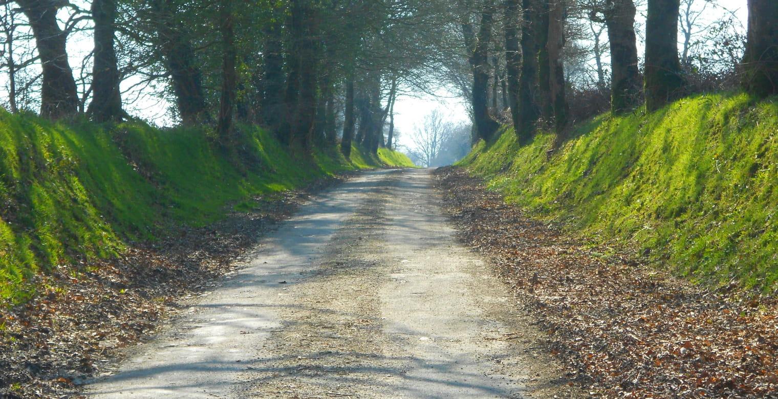 Chemin - entre mûres et noisettes - Le Vieux-Bourg