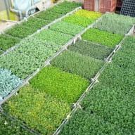 Plantes aromatiques Léguromat