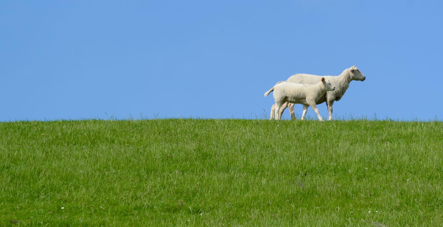ferme_moutons_plourhan