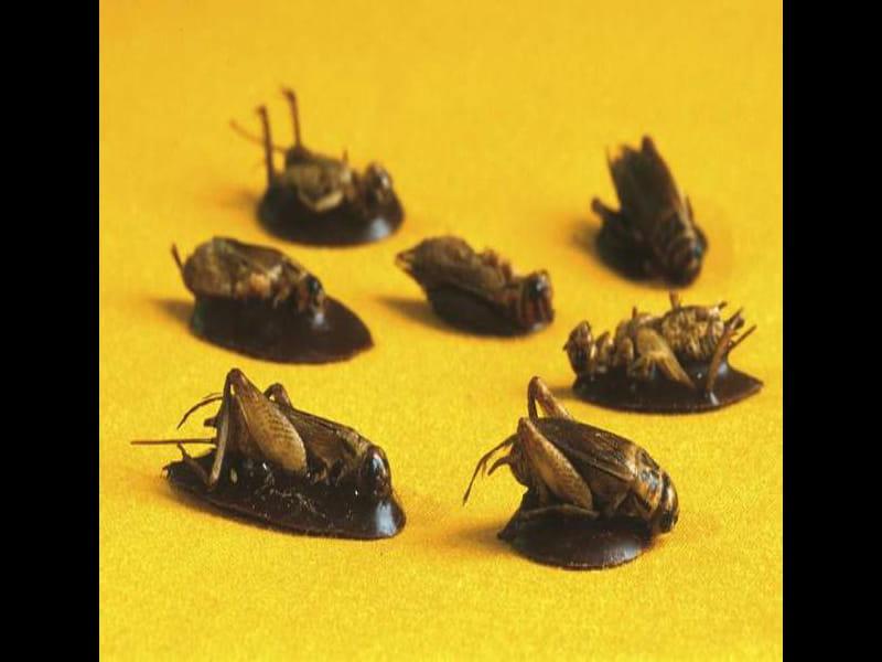 croq'insectes- Lizio