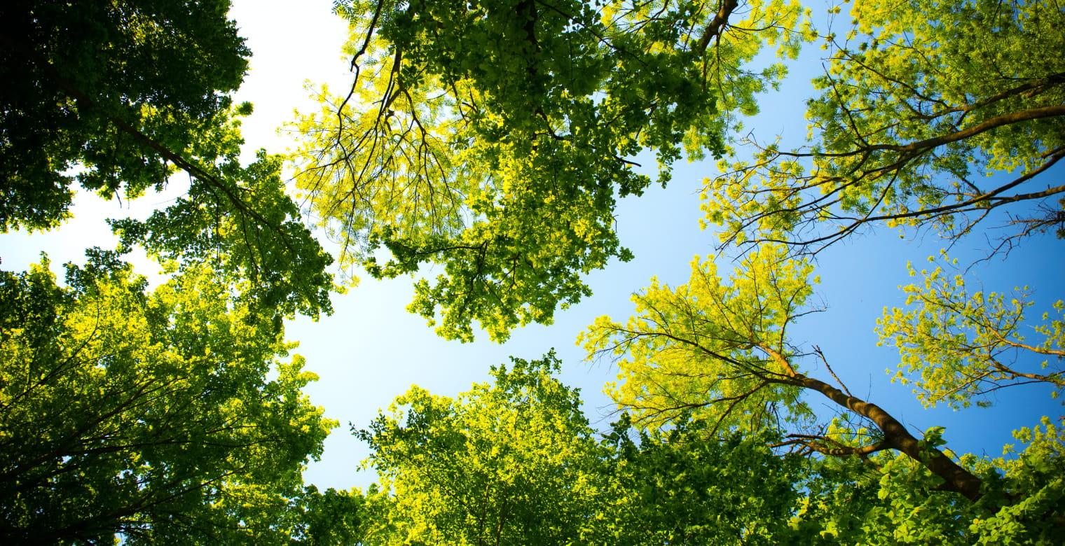 arbres_yffiniac
